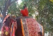 Photo of Yoga Guru Baba Ramdev Does Yoga On Elephant, Falls Off