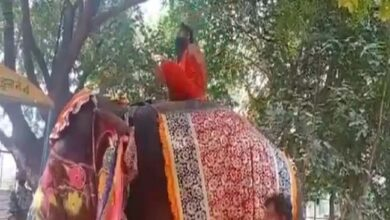 Photo of Yoga Guru Baba Ramdev Does Yoga On Elephant, Falls Off